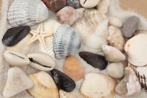 Tratamiento de conchas y caracolas con vinagre. Cómo suavizar o agujerear conchas y caracolas con vinagre.