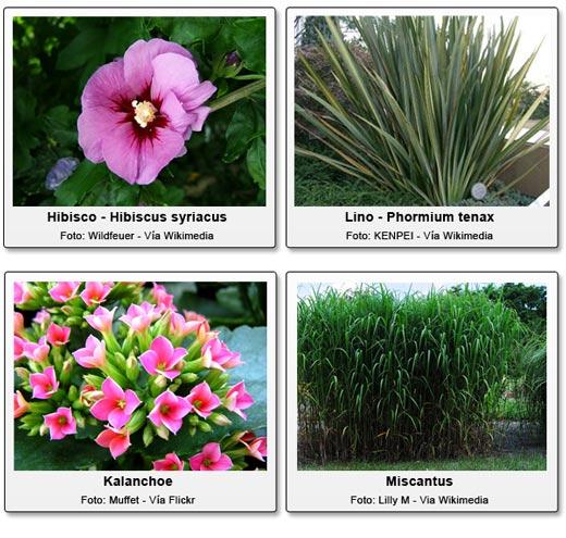 plantas de jardins tipos : plantas de jardins tipos:Cómo crear y mantener un jardín tropical