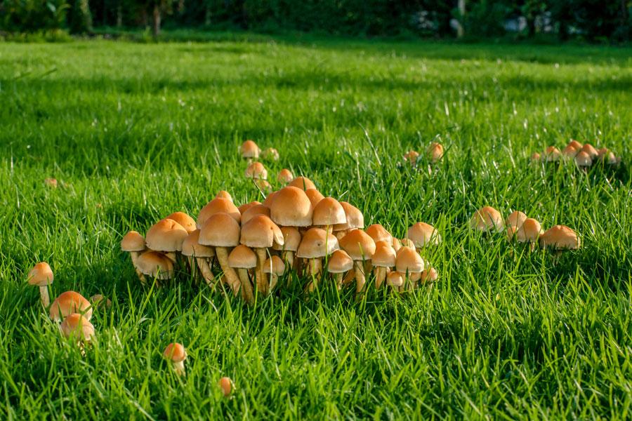Que casas sanar el hongo las uñas