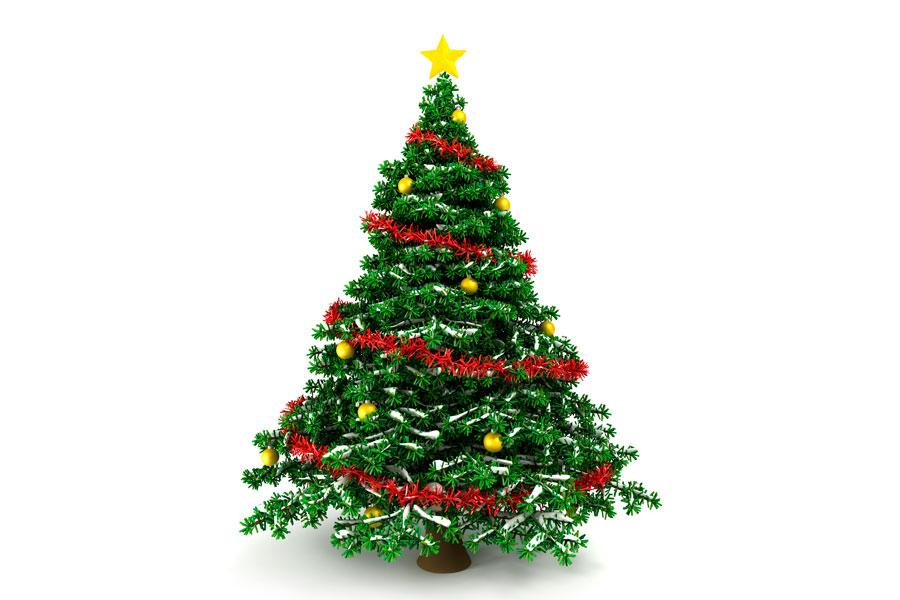 c mo elegir el mejor pino de navidad