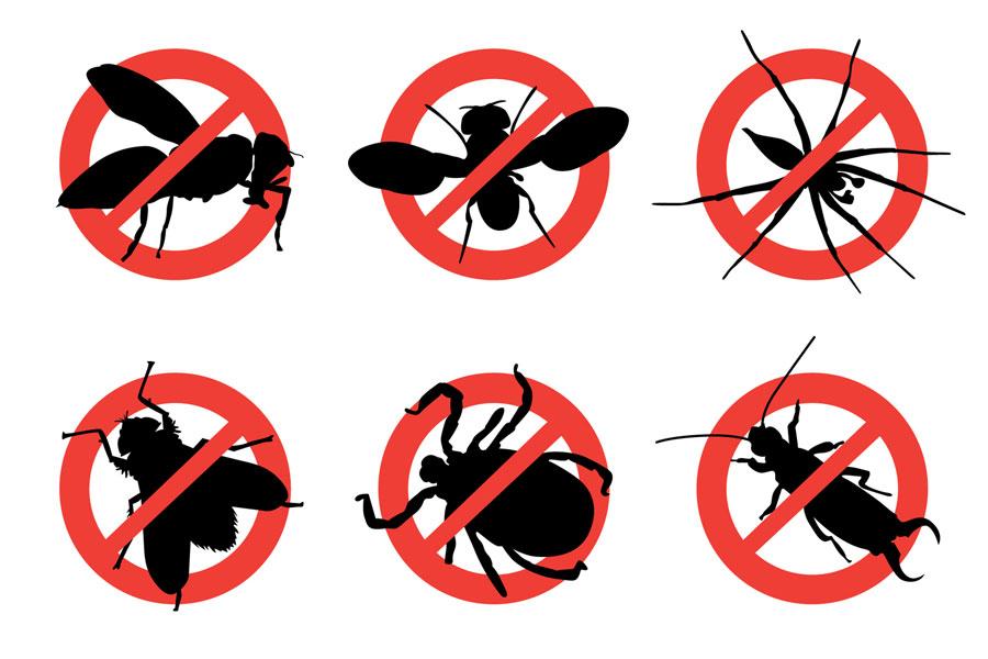 Trucos y remedios caseros para ahuyentar insectos en verano. Tips para ahuyentar insectos del hogar. Como combatir y eliminar insectos en el hogar