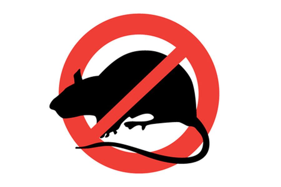 Consejos para evitar la presencia de roedores en el hogar. Trucos caseros para ahuyentar a los roedores. Técnicas para evitar a los roedores