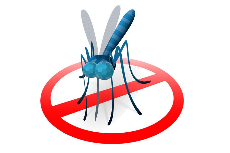 C mo ahuyentar a los mosquitos con productos naturales - Como ahuyentar los mosquitos ...
