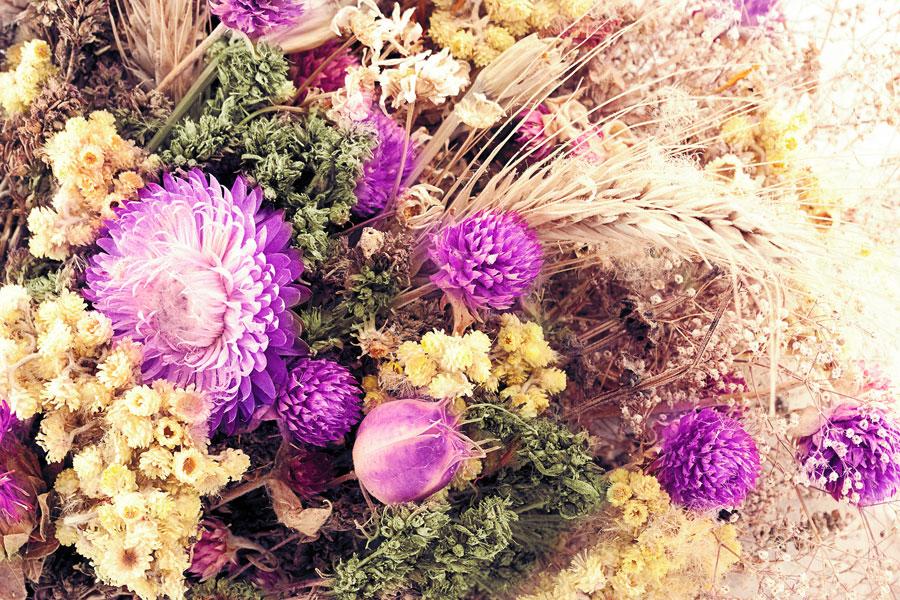 Cómo recolectar y secar flores silvestres