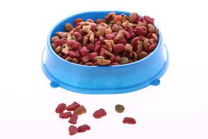 Cómo elegir el alimento balanceado para cachorros