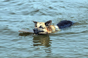 Cómo proteger a las mascotas en desastres naturales