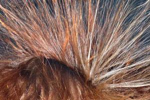 Cómo recuperar el Color de tu Pelo