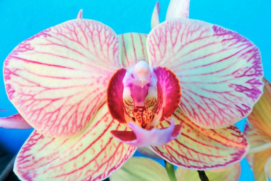 Guía para cultivar orquídeas. Cómo plantar, regar y cultivar orquídeas. Tips para el cuidado de las orquídeas