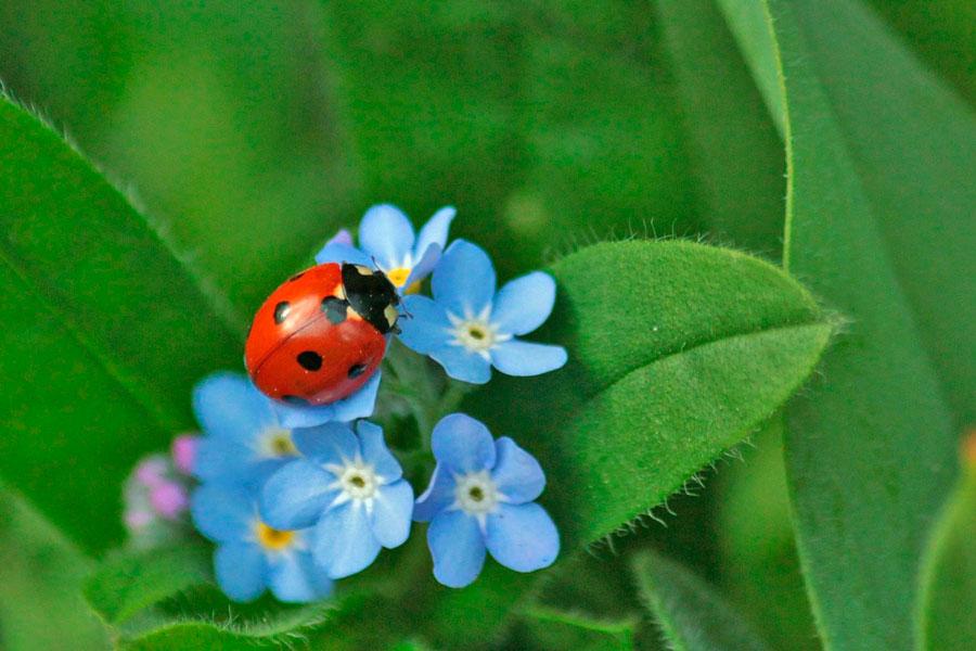 C mo eliminar los insectos de las plantas - Plantas para ahuyentar insectos ...