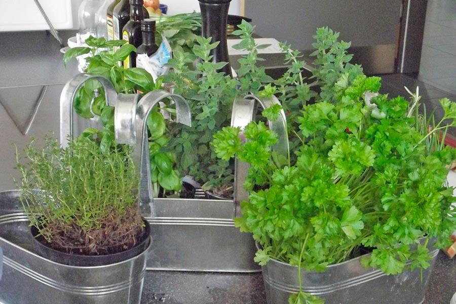 C mo cultivar arom ticas - Plantas aromaticas en la cocina ...