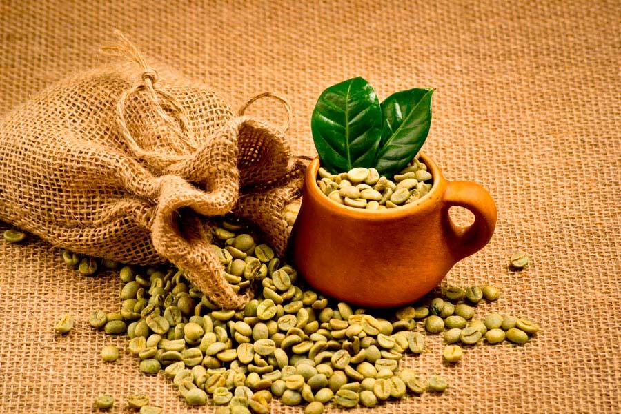 Los peligros asociados al café verde. Por qué es peligroso consumir café verde? Beneficios y peligros de consumir café verde