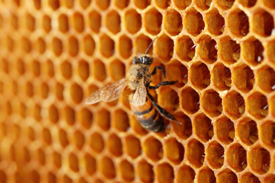 De qué se trata la apiterapia? Tratamientos para la salud con el veneno de las abejas. Para qué sirve la apiterapia?
