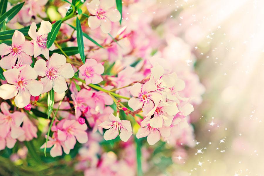 Variedades de plantas tóxicas para animales. Plantas que son tóxicas para las mascotas. Flores peligrosas para la salud de las mascotas