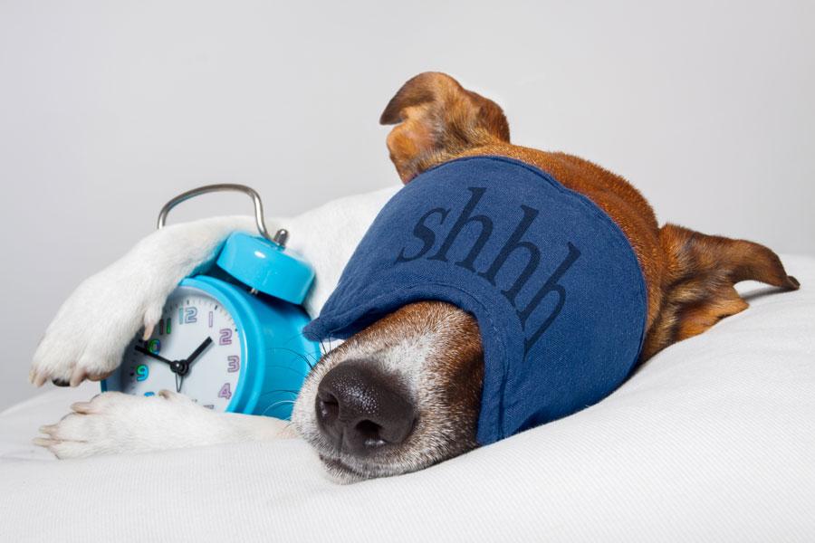 El significado de los sueños con perros. Qué significa soñar con perros de mascota o salvajes. Como interpretar los sueños con perros