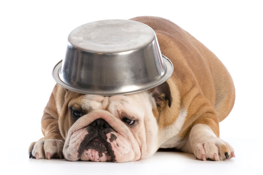Recetas para hacer golosinas para perros. Cómo preparar golosinas para perros sin coccion. Golosinas sin cocción para tu mascota