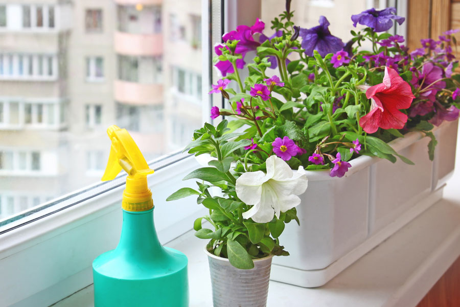 Las mejores plantas para cultivar en verano. Plantas para el verano que requieren poco cuidado. Cuáles son las mejores plantas para el verano?
