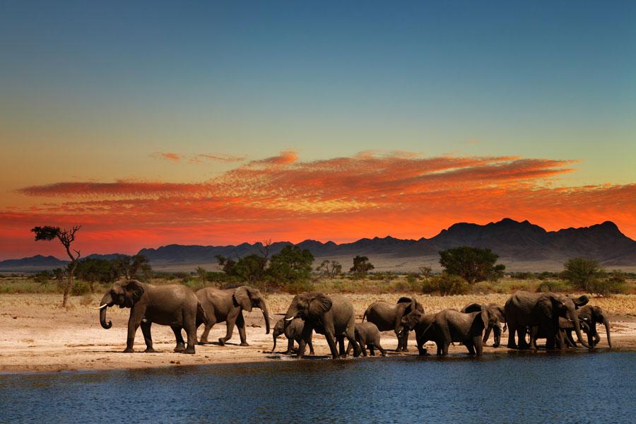 Guía para recorrer África durante un año. Cómo viajar por áfrica. Pasos para visitar áfrica durante un año.  Cómo hacer un viaje por áfrica