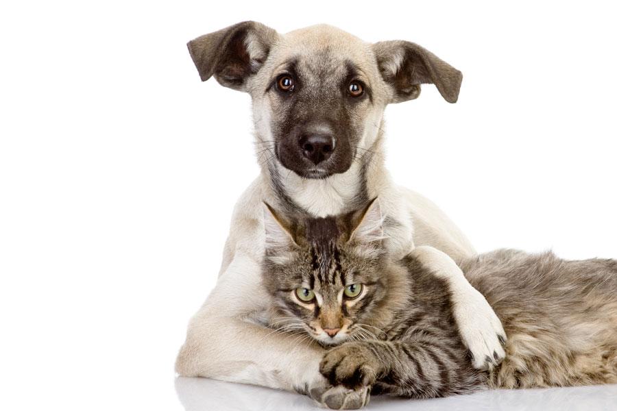 Recomendaciones del Feng Shui para las mascotas. Feng shui para perros, gatos y otros animales. Cómo aplicar consejos del Feng Shui para las mascotas