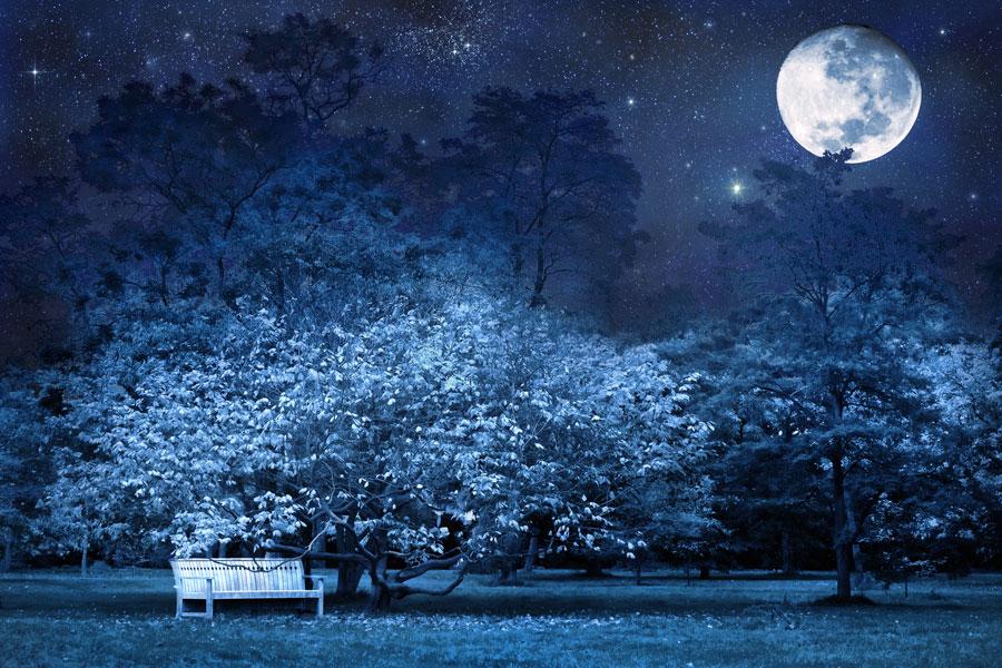Beneficios de la luna en jardinería. Cómo aprovechar la energía de la luna en el jardín. Tareas de jardinería según la luna. Sembrar en luna llena