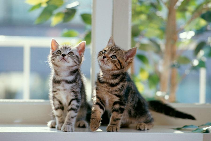 Sitios de citas para mascotas. Cómo encontrar una pareja para tu mascota. Paginas para buscar pareja para tu perro o gato. Citas para mascotas