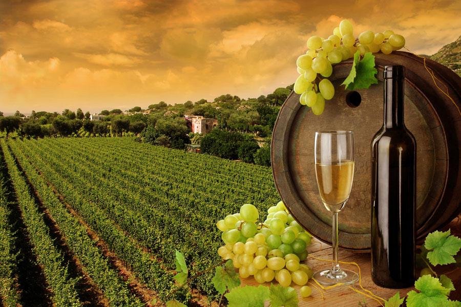 Consejos para viajar y conocer sobre vinos. Cómo disfrutar de un viaje y aprender sobre vinos. De qué se trata el enoturismo?