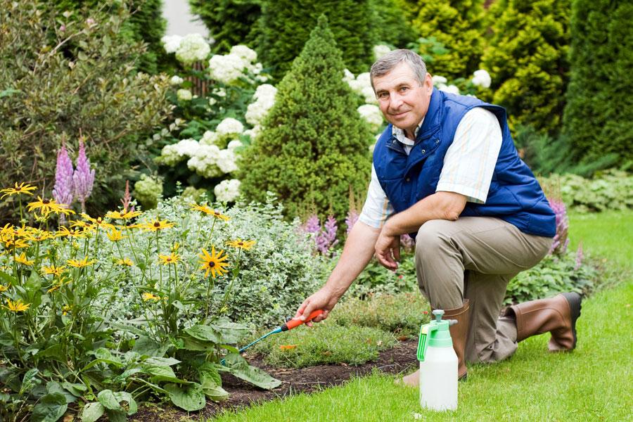 Cómo mejorar tu jardín. 3 consejos útiles para mejorar el jardín. Cómo embellecer el jardín en 3 pasos