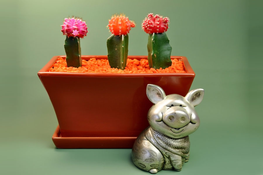 C mo pintar piedras y simular cactus for Como pintar piedras