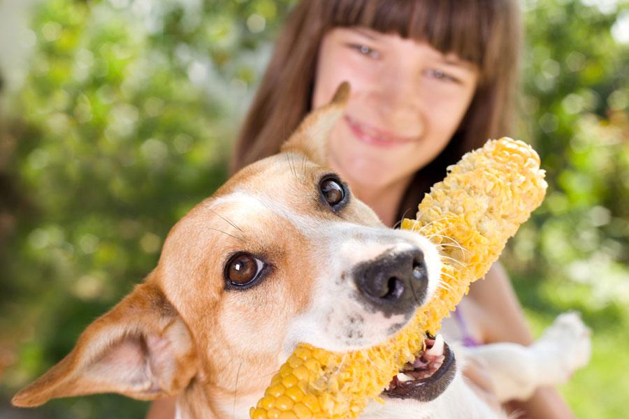 Productos peligrosos para tu perro en casa. Evita accidentes con los productos venenosos para tu perro. Productos peligrosos para tu mascota