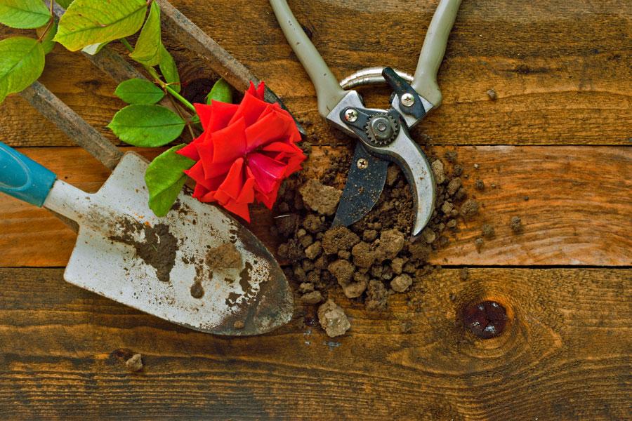 C mo plantar un rosal - Como aprender jardineria ...