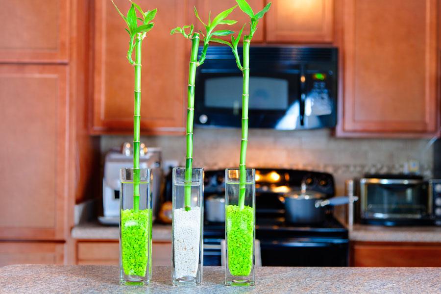 Consejos para cultivar bambú. Cómo reproducir varas de bambú. Consejos para el cuidado de las varas de bambú. Cómo reproducir bambú