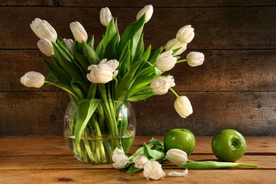 Plantas para interior con poca luz for Plantas para interiores oscuros