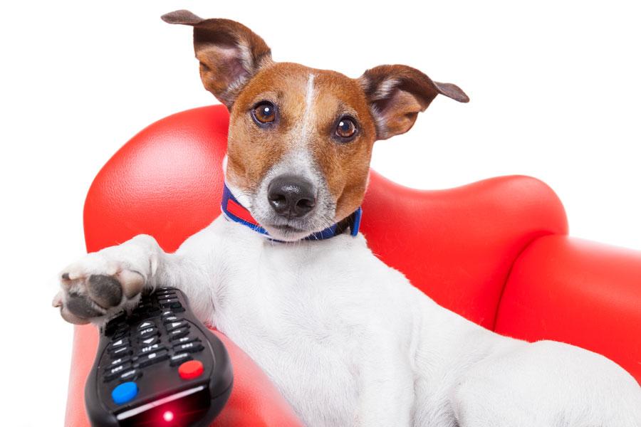 Cómo entretener a perros y gatos. Canales de entretenimiento para mascotas. 2 opciones para entretener a las mascotas