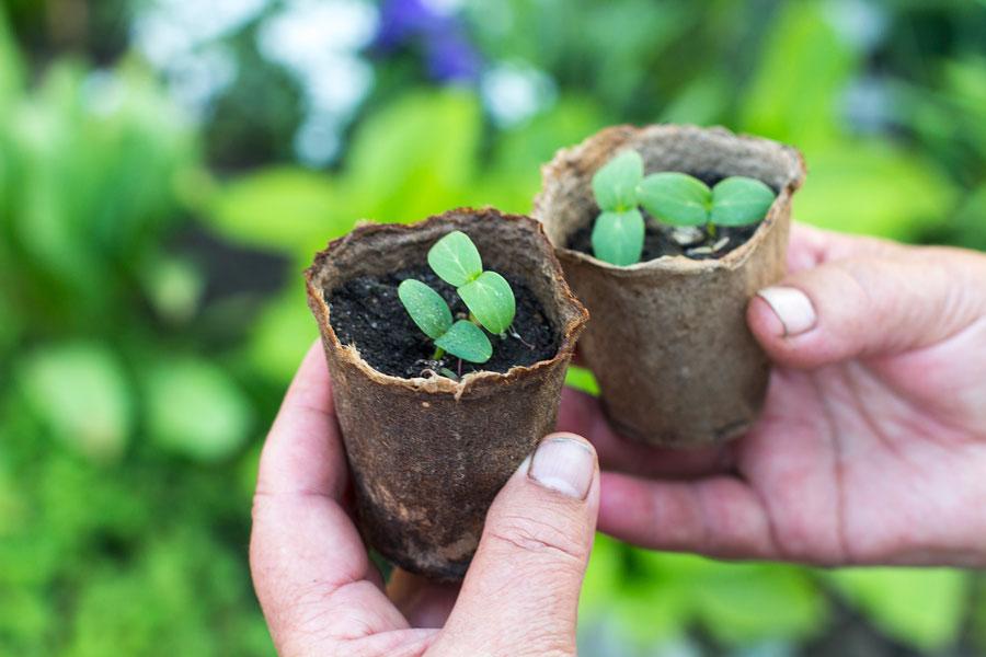Cómo hacer tiestos biodegradables de papel o cartón. Cómo crear tiestos con materiales reciclados. Tiestos biodegradables con frutas
