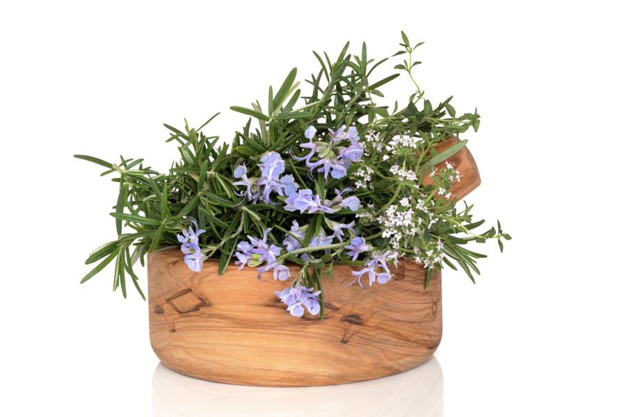 Consejos para cultivar una planta de romero. Tips para plantar romero. Cómo cuidar una planta de romero. Claves para cultivar romero