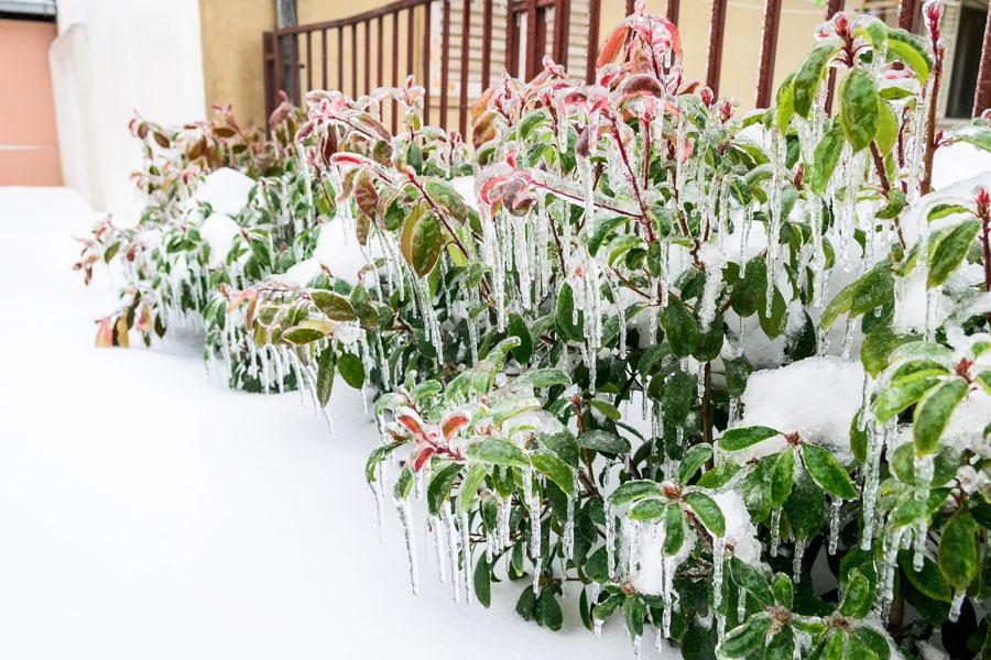 Las mejores especies para el invierno. Tips de plantas para el invierno. Plantas y flores para el invierno.