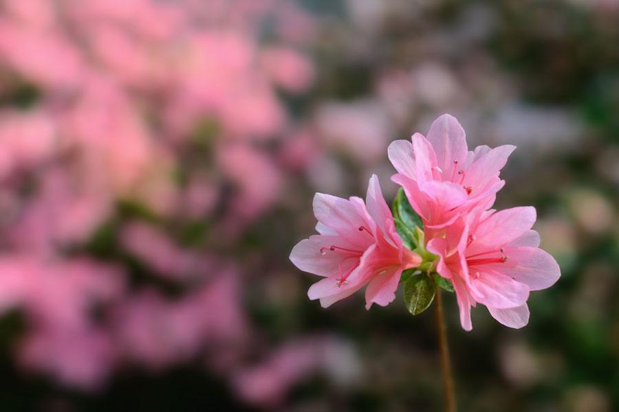 15 hierbas peligrosas que debes evitar. Hierbas que no debes usar en tus recetas caseras. 15 hierbas peligrosas para tus tratamientos de belleza
