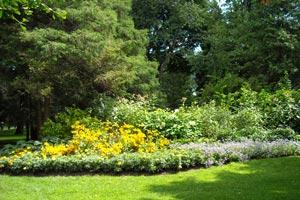 Cómo ayudar al medio ambiente desde el jardín