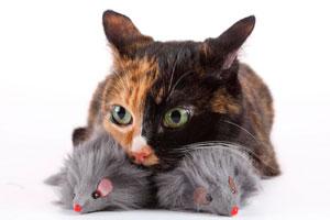 Consejos para ahorrar en el cuidado de la mascota