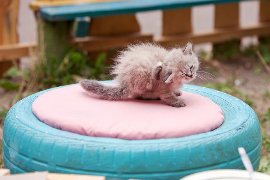 Cómo eliminar las pulgas del gato. Remedios para quitar las pulgas a un gato. Métodos para eliminar las pulgas del gato