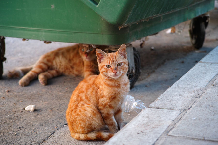 remedios caseros para ahuyentar gatos