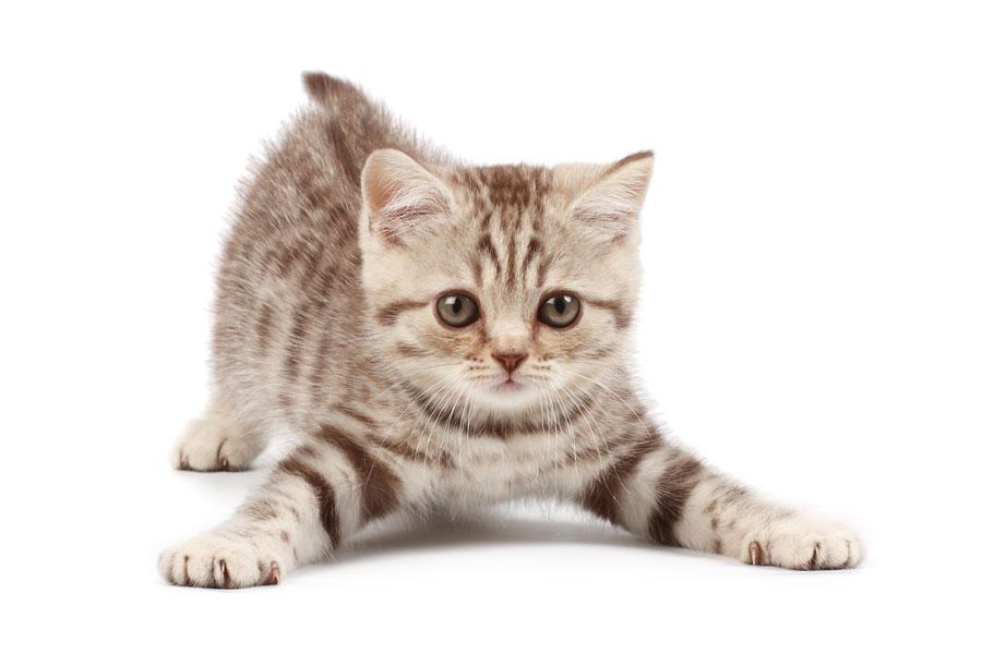 Cómo ahuyentar gatos con recetas caseras. tips para ahuyentar gatos callejeros. Cómo alejar gatos callejeros. Recetas naturales para alejar gatos